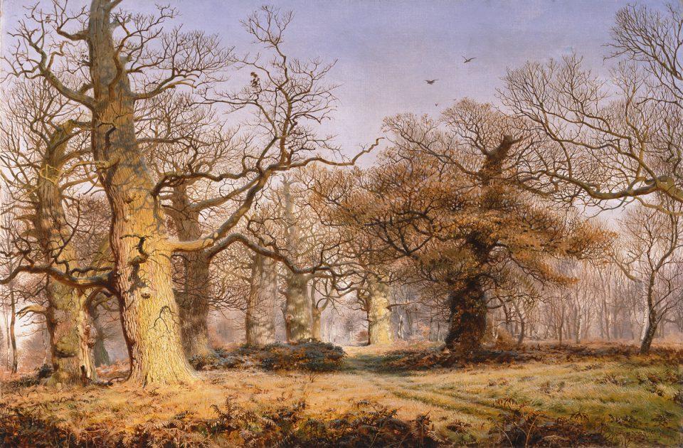 7_Oak Trees in Sherwood Forest by McCallum
